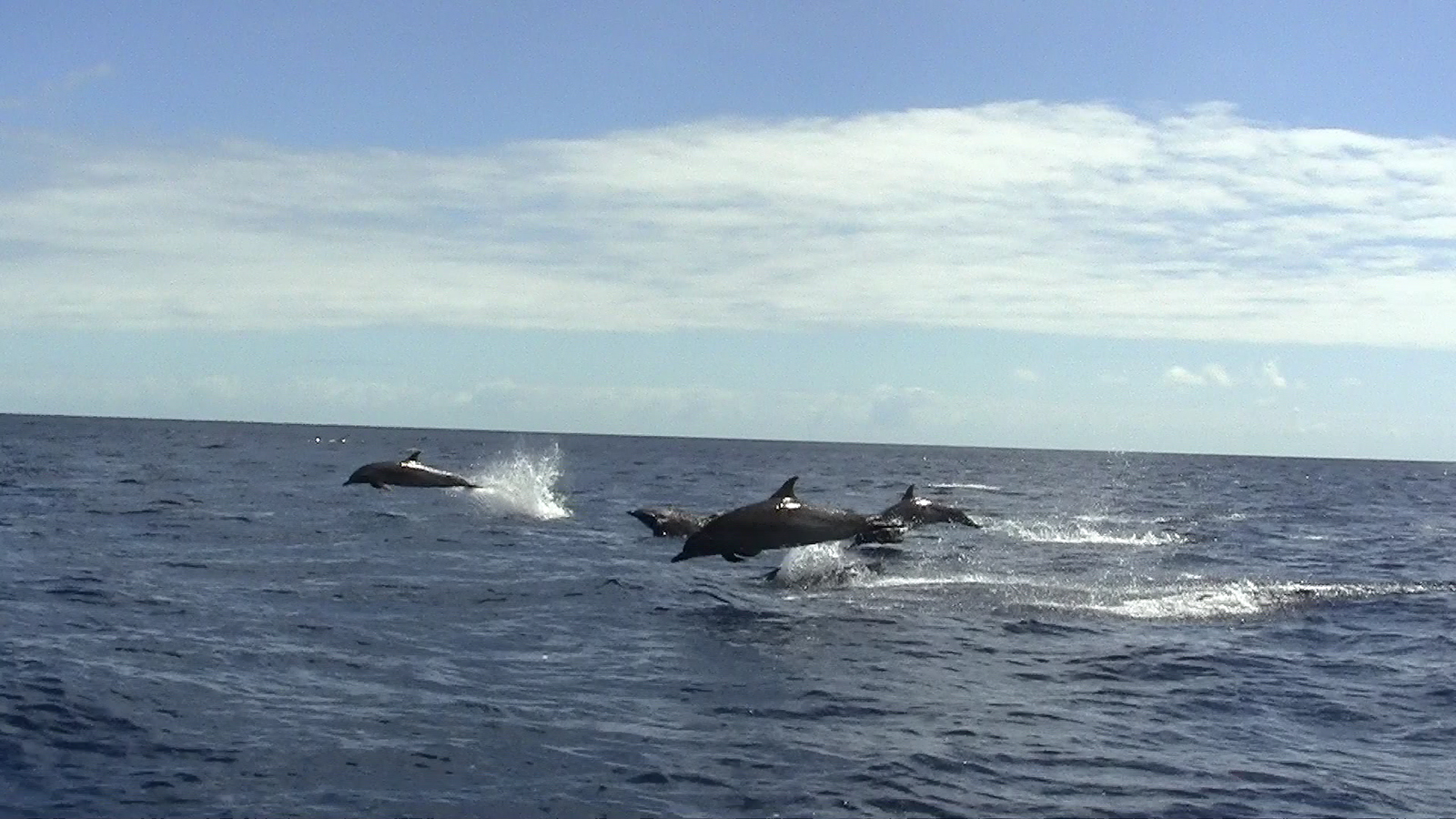 Dolphins St Helena