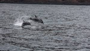 Dolphin tours st Helena island