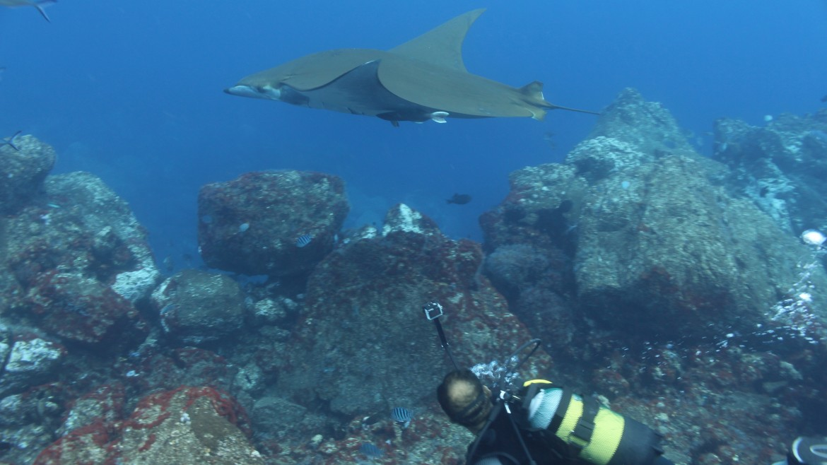 Dive-St-helena-with-rays.jpg