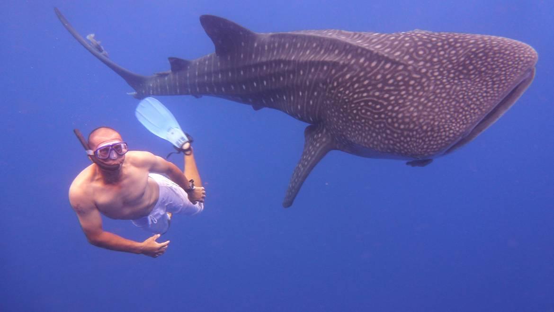 Whaleshark-photograph-4.jpg