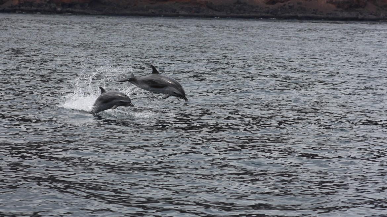 dolphin-tours-st-helena-island.jpg