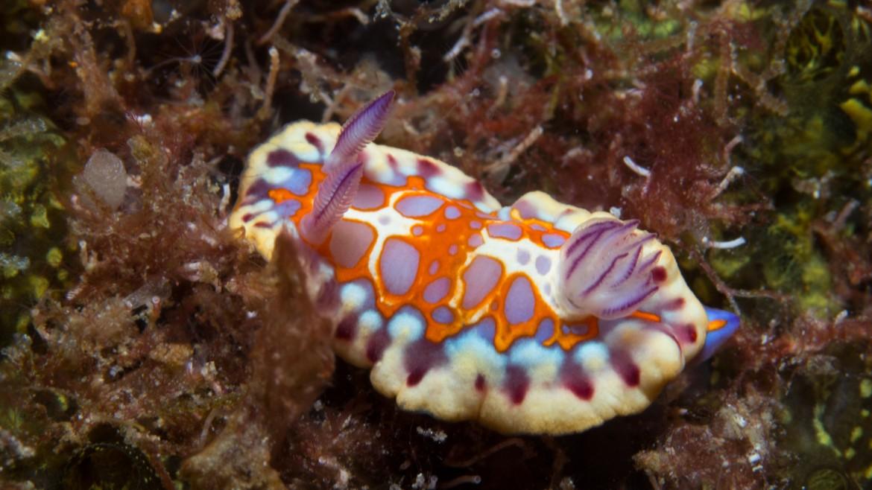 sea-slug-st-helena.jpg