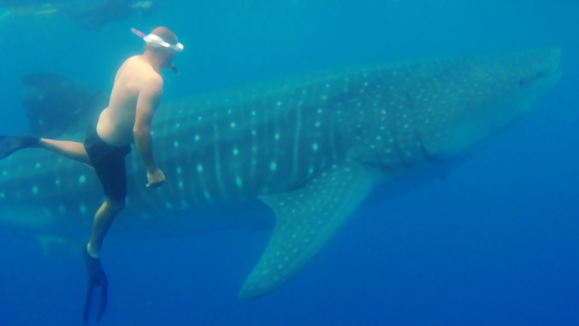 swimming-with-whale-sharks.jpg