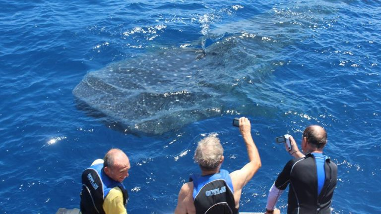 Diving, tours and whale shark encounters