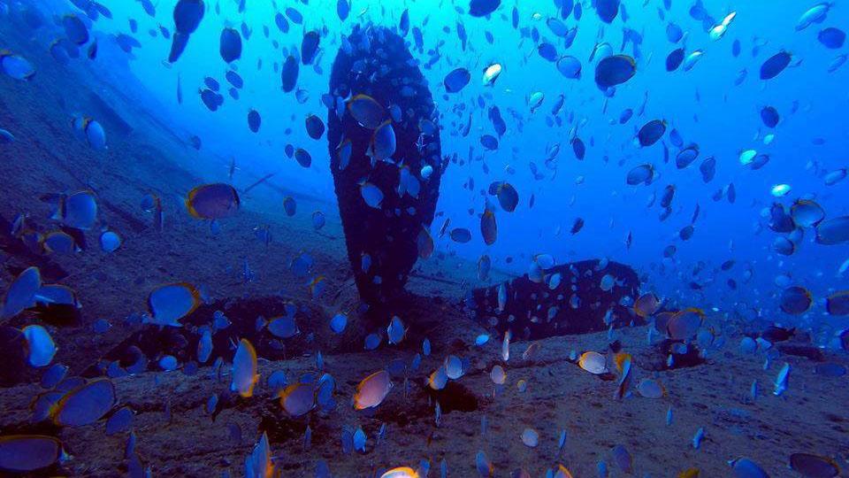 Fp-dive-saint-helena.jpg