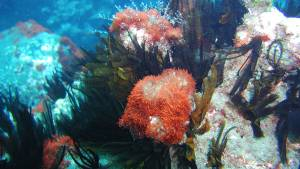 dive saint helena plants