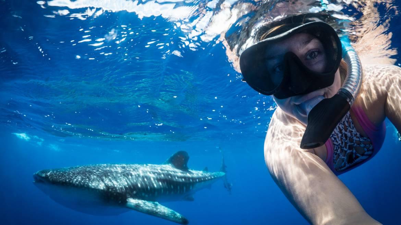 whale-sharks-st-helena-1.jpg