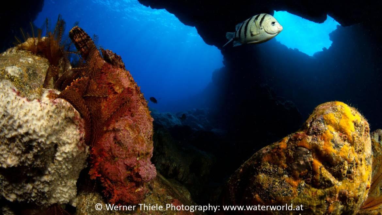 Stone-fish-St-Helena-1.jpg