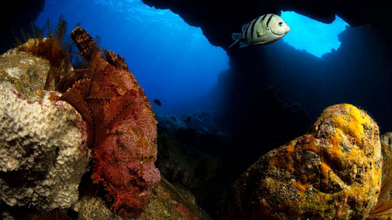 Stone-fish-St-Helena.jpg