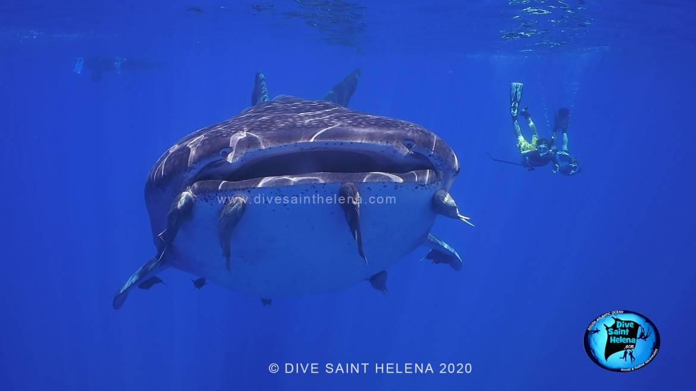 whale-sharks-2020a.jpg