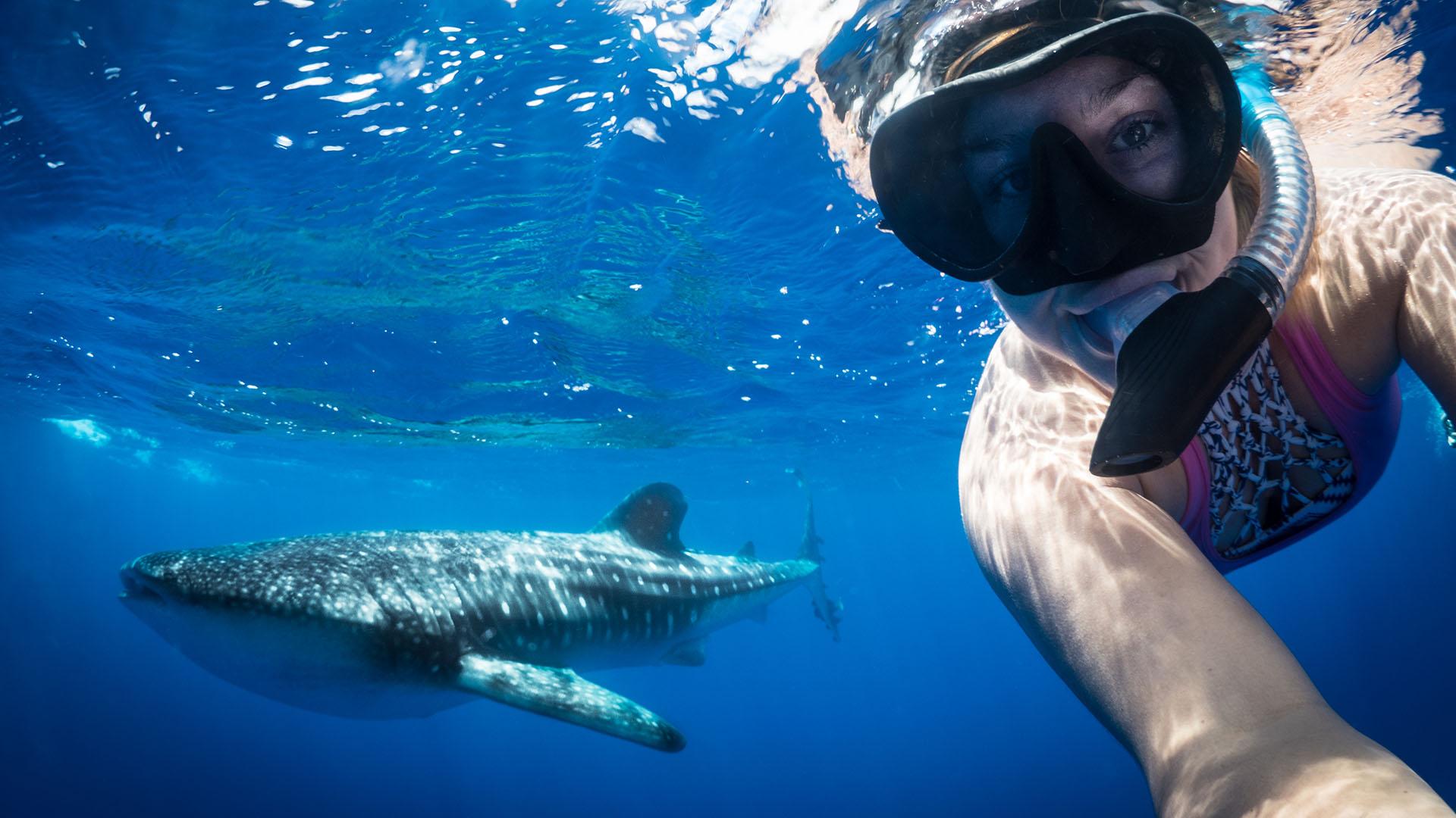 Whale sharks St helena